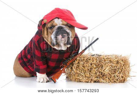dog dressed like a hunting farm dog on white background