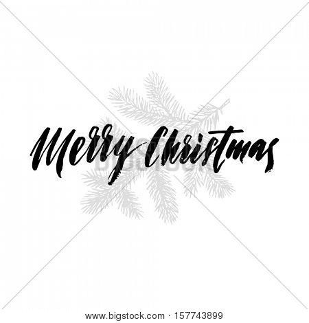 Merry Christmas text for greeting card with fir, pine and spruce branches on on white background