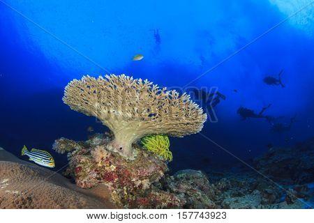 Scuba dive, fish and coral reef in ocean