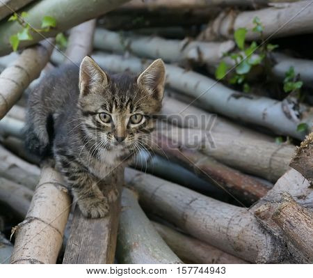 Pretty kitten with intent look sitting on firewood