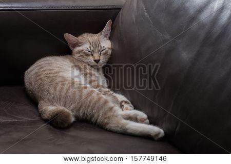 Sleeping kitten on black sofa in living room