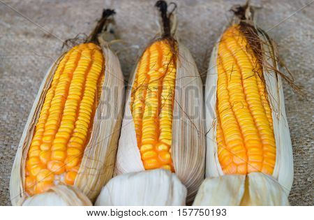 Closeup dried corn situated mid sunlight healthy organic nutrition