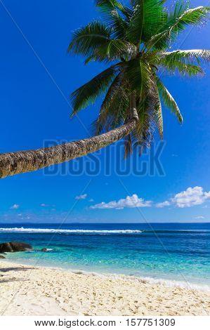Wallpaper Scene Palm