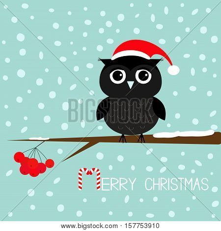 Black owl in Santa Claus hat. Cute cartoon character sitting on rowan rowanberry sorb berry tree branch. Snow flake blue background. Merry Christmas Candy cane text. Greeting card. Flat design. Vector