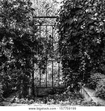 old iron gate in black and white in the middle of nature