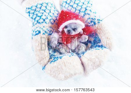 Female hands holding a cute teddy bear. Woman hands in white mittens showing a teddy bear gift dresses in knitted hat and scarf. Cute Christmas present. Winter holidays concept.