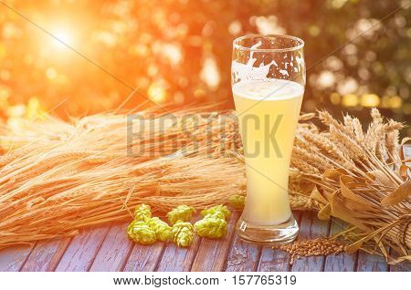large glass of light unfiltered beer, malt, hops, barley ears standing on an old wooden table dyeing, natural background