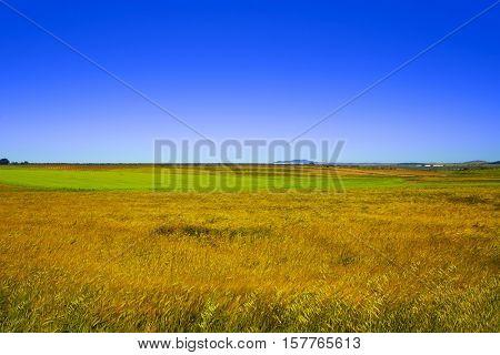 Cereal fields in Extremadura of Spain by via de la Plata way