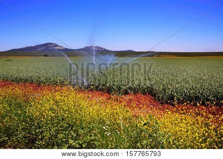 Via de la Plata way cereal fields in Spain at Extremadura
