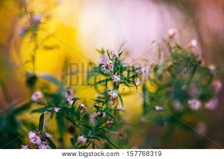 Beautiful fairy pink white small flowers on colorful dreamy magic yellow pink purple blurry background soft selective focus macro closeup nature shot morning sun light copyspace for text