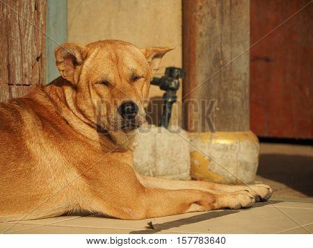big funny Dog Sleeping On The street