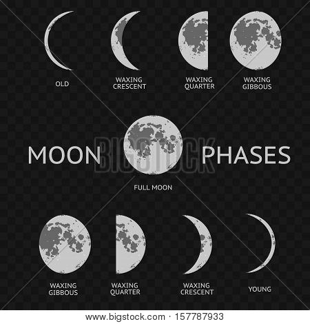 Phases of moon. Whole Astronomy Cycle on a Transparent Background. Vector illustration