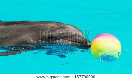 Dolphins Frolic In The Blue Clear Water, Selective Focus