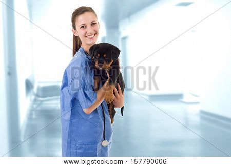 Brunette veterinary with a rottweiler puppy dog at the clinic