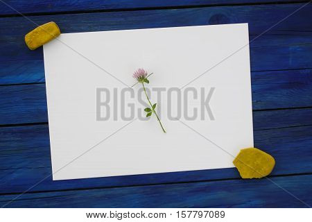 Summer flowers with blank paper for greeting message on a blue shabby wooden background.