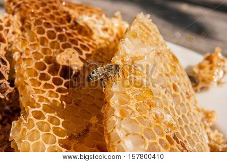 Close Up View Of The Working Bee On The Honeycomb With Sweet Honey. Sweet Honey In The White Plate O