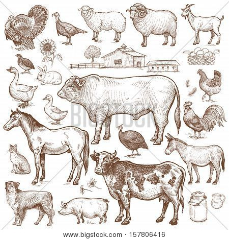 Vector large set farm theme. Animals cattle poultry pets landscape. Objects of nature isolated on white background. Drawings for text illustration decoupage design covers signage posters.
