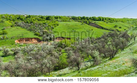 Green landscape in Ukraine at beautiful spring season.