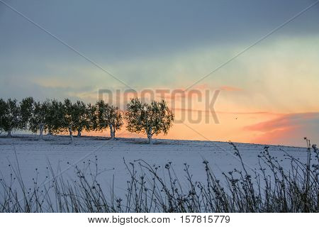 RURAL LANDSCAPE WINTER. Between Apulia and Basilicata. ITALY. Sunrise: snowy hill with olive grove.
