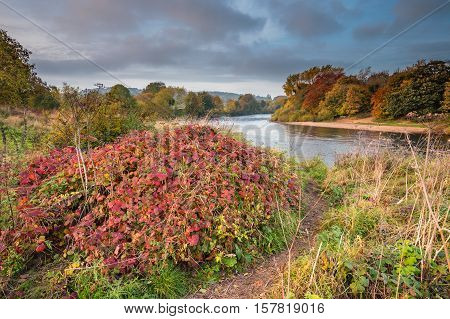 Autumn on River Tyne, which is formed when the Rivers North and South Tynes converge near Warden, in Northumberland. Also known as The Meeting of the Waters