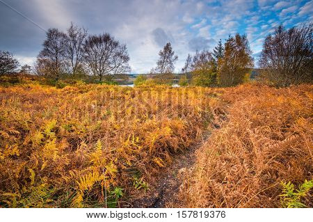 Autumn Bracken on shore of Kielder Water, and Forest Park in Northumberland, which has the largest man made lake in Northern Europe. The reservoir sits in the North Tyne Valley with the river flowing through it