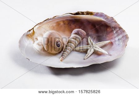 Assorted sea shells arranged on a big shell on white background. Collection of coral elements.