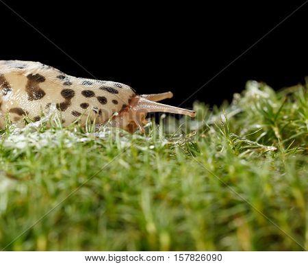 Slug Slippery Way