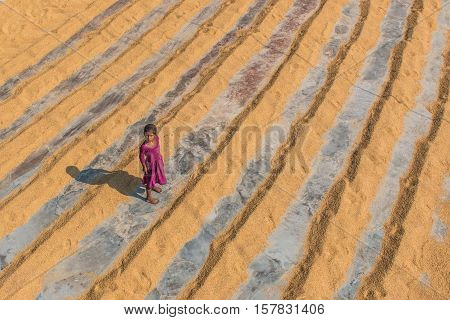 DHAKA BANGLADESH - 18 November 2016 Unidentified chidren in a rice mill