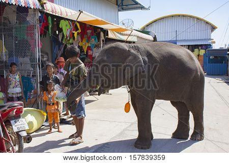 SRAKAEW THAILAND - JANUARY 8 : combodian boy feeding vegetable to younger elephant at Rong Klua market border thailand - cambodia on january 8 2012 in srakaew thailand