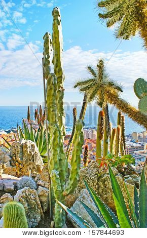 The view on the coatline of Monaco through the cactuses and agaves of Jadin Exotique botanical garden located on the rocky cliff.