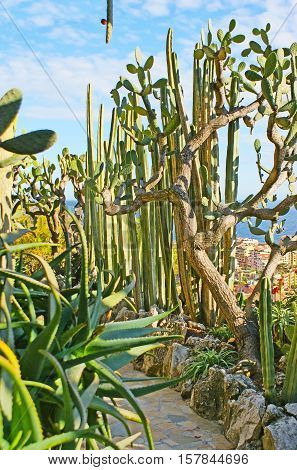 Jardin Exotique botanical garden is the pearl of Monaco its shady pathes among exotic plants are the best choice for the daily walks.