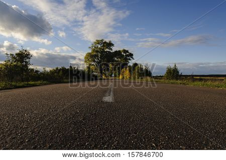 Long tarmac road with white lines down the centre stretches through the tunnel of trees at the horizon.