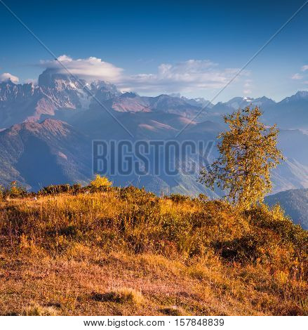 Colorful Autumn Morning In The Caucasus Mountains.