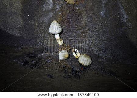 Underground mushrooms in underground river Neglinnaya, Moscow