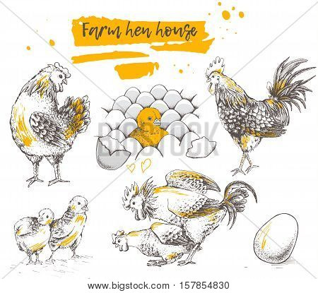 Set of farm chicken family. Rooster and brood. Mating of rooster and hen. Chicken with eggs. Ribbon with text. Vector illustration on white background for your design. Hand drawning. Trace pictures