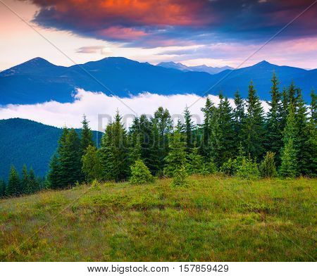 Colorful Summer Scene In The Carpathian Mountains.