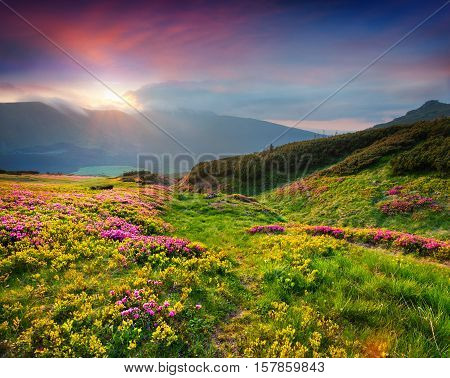 Natural Summer Scene In Carpathian Mountains