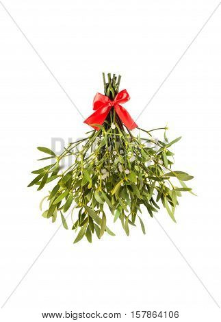 Broom from green mistletoe isolated on white background. Nature background. Christmas plant