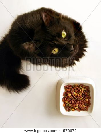 Cat With No Mood For Food