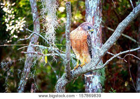 Hawk in a beautiful state of mind