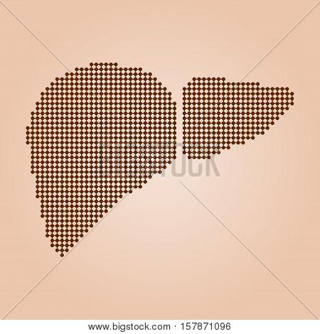 Human liver anatomy. Liver medical science vector illustration.