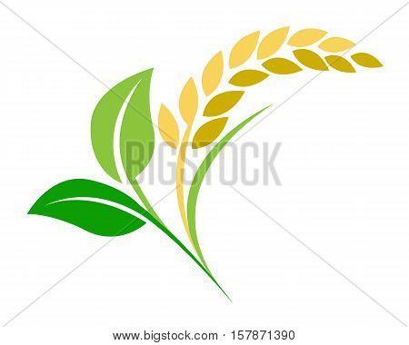 ear of paddy rice and plant leaf vector