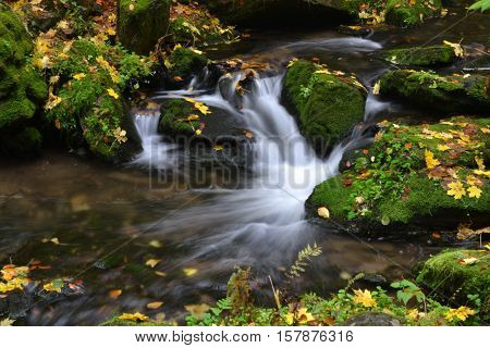 Cold Creek, rapidly flowing between the stones, which are overgrown with moss and fallen leaves them yellow.