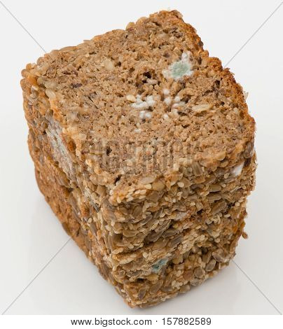 Blue Mold on a whole grain bread