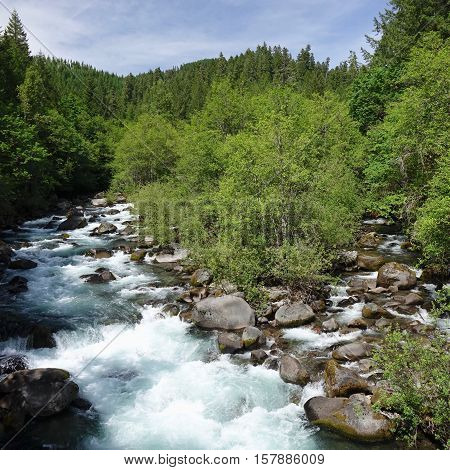 A creek merges with Umpqua River in Western Oregon on a sunny summer day.