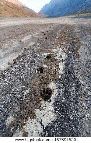 Animal Tracks on an Arid Area and a Mountain