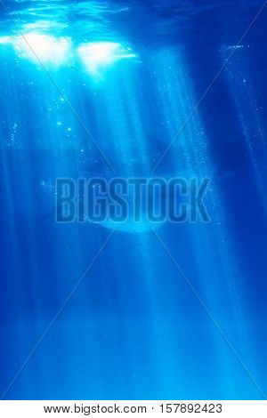 Dolphins under the water sunny sky nature concept