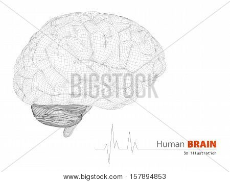 3d illustration of human brain on white background