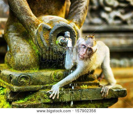 Monkeys in a stone temple. Bali Island Indonesia.