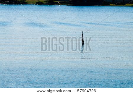 Tranquil and peaceful beautiful lake with one tree stick sticking up.